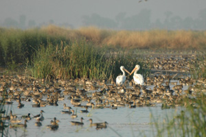 a_yolo_wildlife_area_(2)