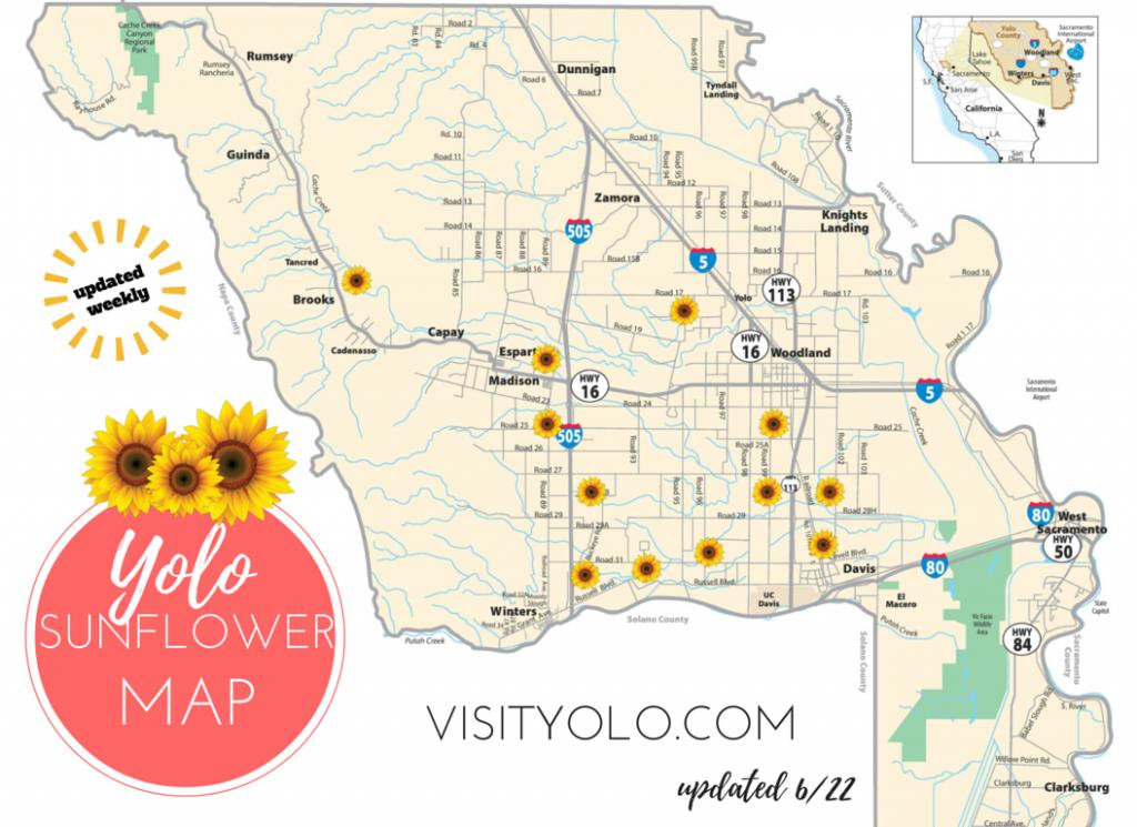 Sunflower Field Map