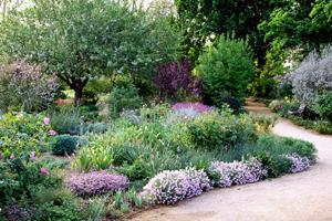 a_Sylvia_Wright_UC_Davis_Arboretum_(2)
